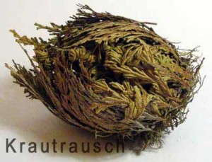 Rose von Jericho kaufen