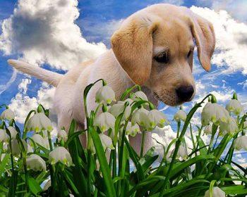 Hund im Blumenfeld (Bild: Gellinger / Pixabay.com)